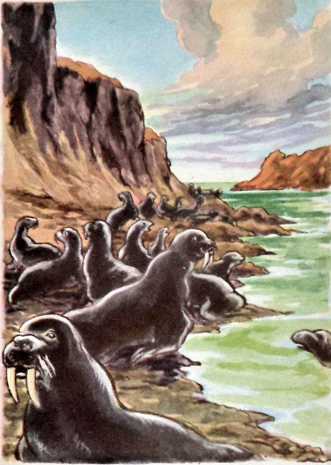 Original Retro Print Walruses in Alaska, 50s Marine Life Print, Animal Print, Yukon, Walrus on Beach,  Arctic Exploration, kids room decor by MushkaVintage3 on Etsy