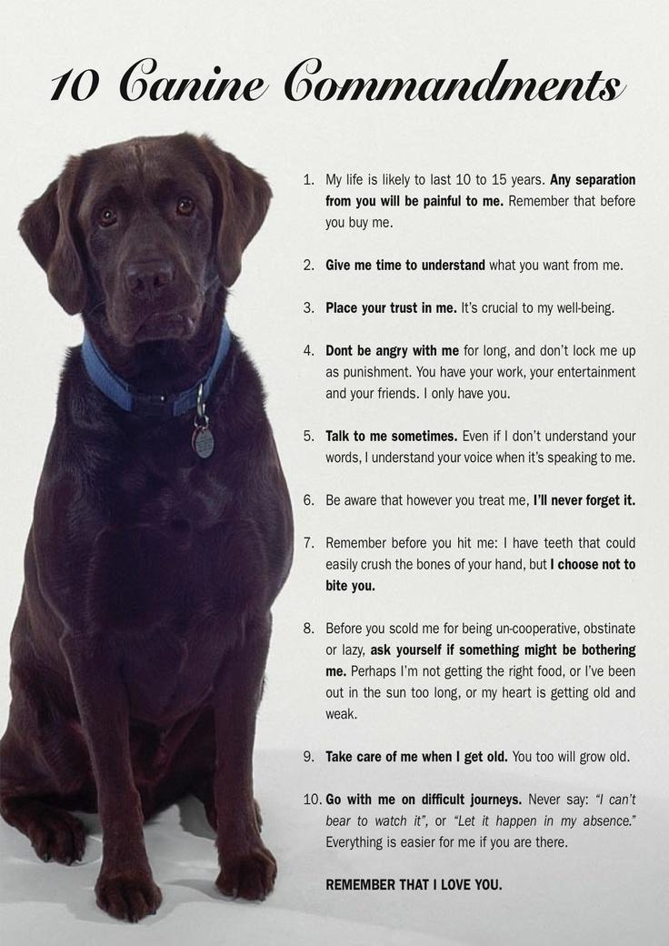 Ten Commandments Quotes: #canine #commandments #dogs #love #quotes