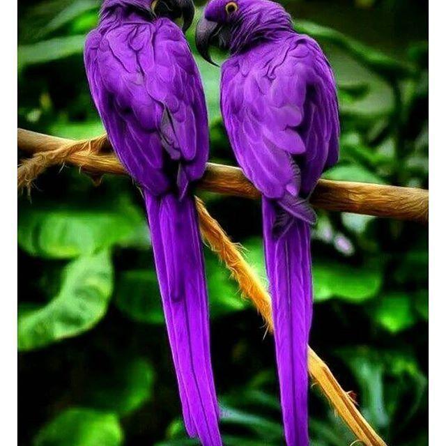 Birazhuzur Mit Bildern Hubsche Vogel Papagei Susseste Haustiere