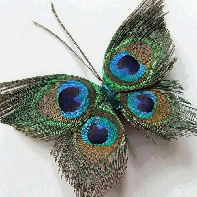 mariposa con plumas de pavo real                                                                                                                                                                                 Más