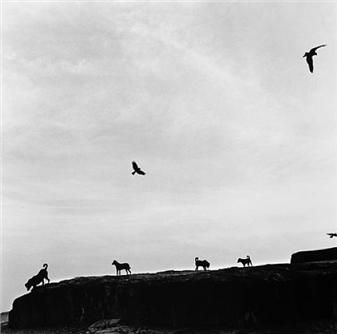 Not Elliott Erwitt but Graciela Iturbide: 'perros perdidos' (rafasthan, india, 1997)   Flock of wandering dogs in the outskirts of a city in India.