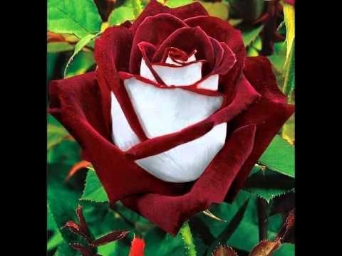 Risultati immagini per fiori bellissimi