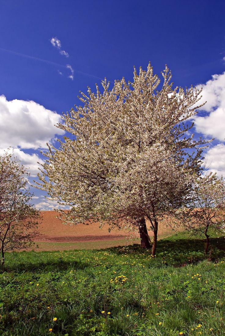 SKOTIA Photography - Through The Lens: Zaklinanie wiosny na Kaszubach