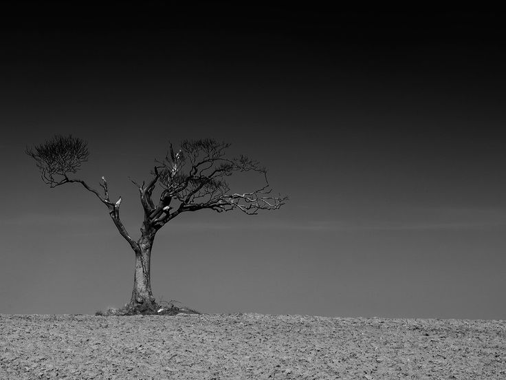 Rhianna Tree by Geoff McGrath on 500px