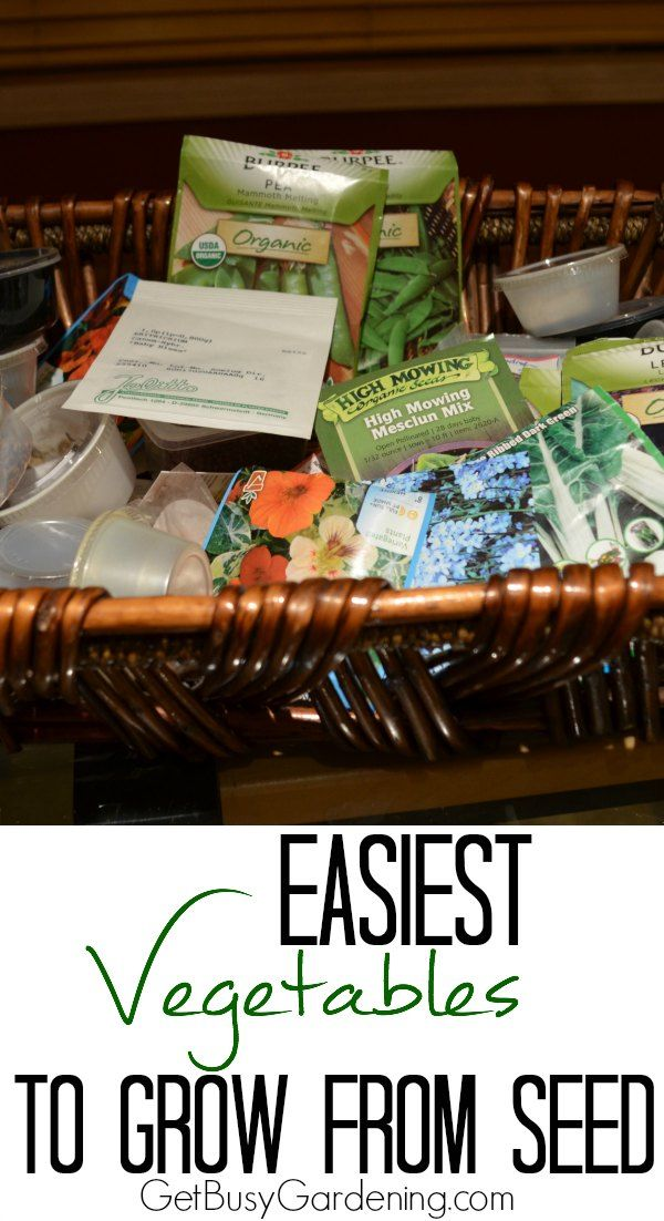If you're interested in starting vegetable seeds for the first time, begin with vegetables that are easy to grow from seed. Here's a list to get you going... Easiest Vegetables to Grow from Seed | GetBusyGardening.com