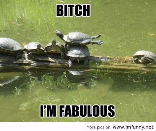 funny turtle.....I like turtles