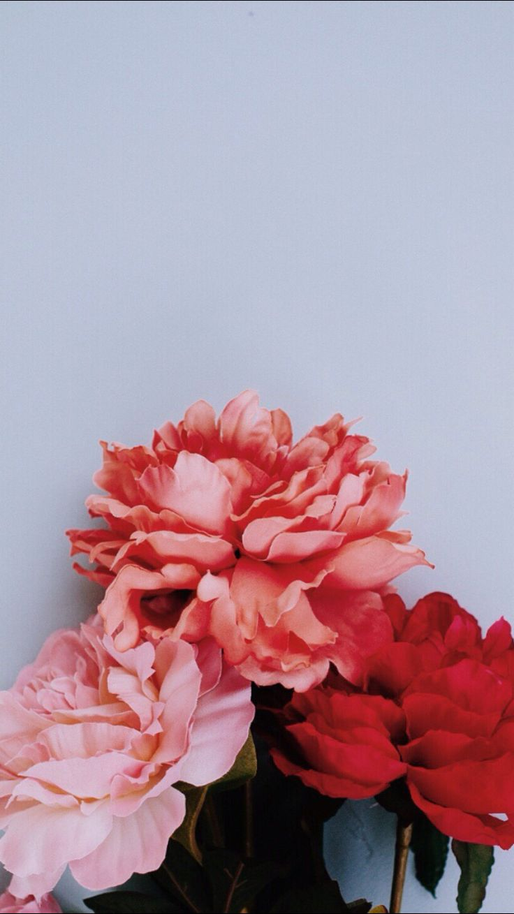 So pretty!  The red, and pinks play off each other so well! We love flowers and when they look this good we gotta have them!