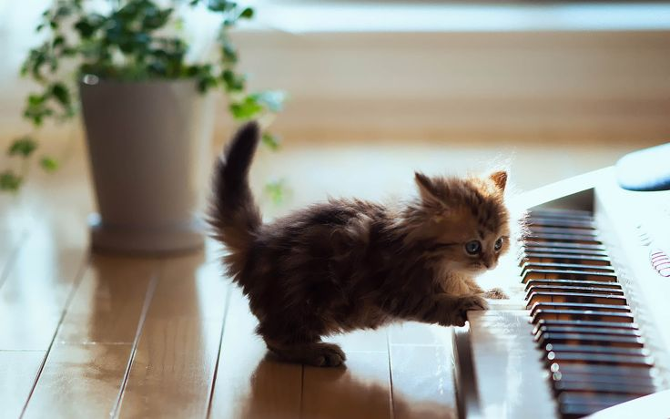 cute kitten playing piano.... #funny #meme #LOL #humor #funnypics #dank #hilarious #like #tumblr #memesdaily #happy #funnymemes #smile #bushdid911 #haha #memes #lmao #photooftheday #fun #cringe #meme #laugh #cute #dankmemes #follow #lol #lmfao #love #autism #filthyfrank #trump #anime #comedy #edgy