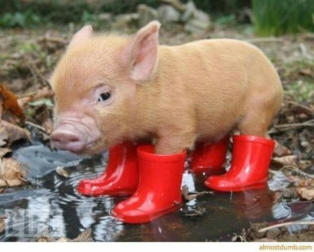 When God gives you rain, put on your cute boots!