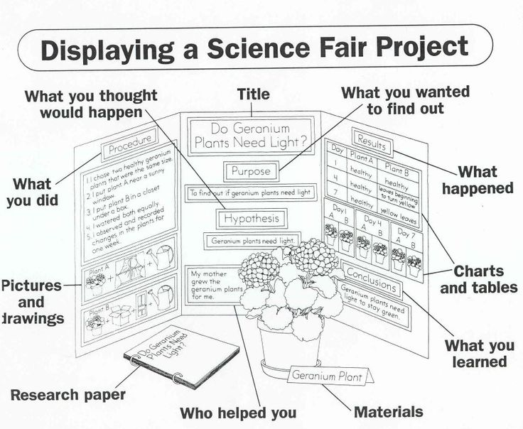 sample science projects boards