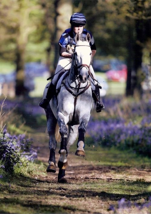 Eventing.    I love this picture with the purple and green colors leading all the way from the background to the foreground.