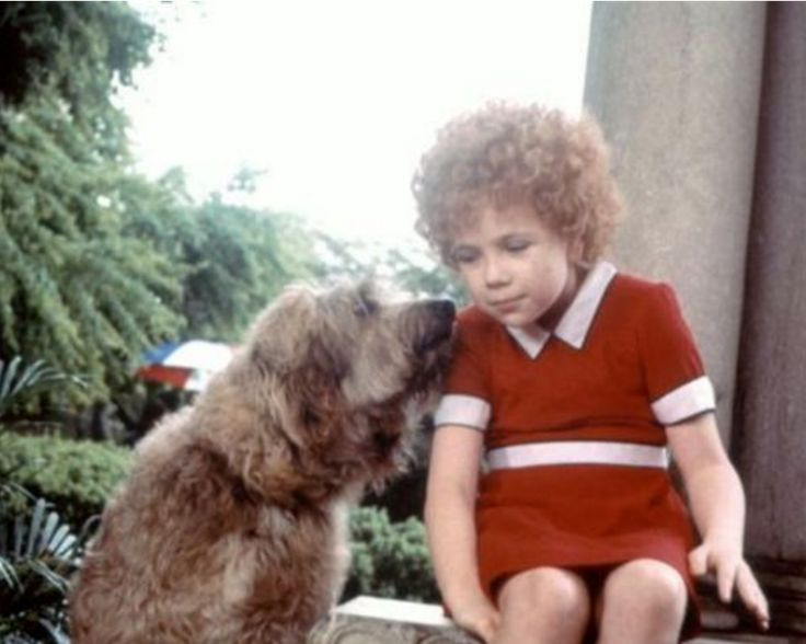 In the 1982 film Annie, Sandy was played by a 6-year-old otterhound named Bingo.
