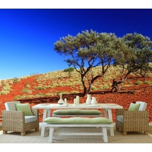 Decorazione Outback australiano KT217 Dimensione: 420x270cm deserto natura carta da parati albero: Amazon.de: Kitchen & Home