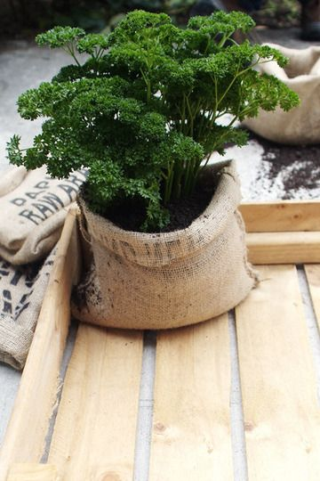 Coffee bag pots are fantastic for so many reasons. They're made from recycled material, biodegradable, weather resistant, lightweight, they're flexible so plants have room to grow and best of all you can make them yourself in less than half an hour.