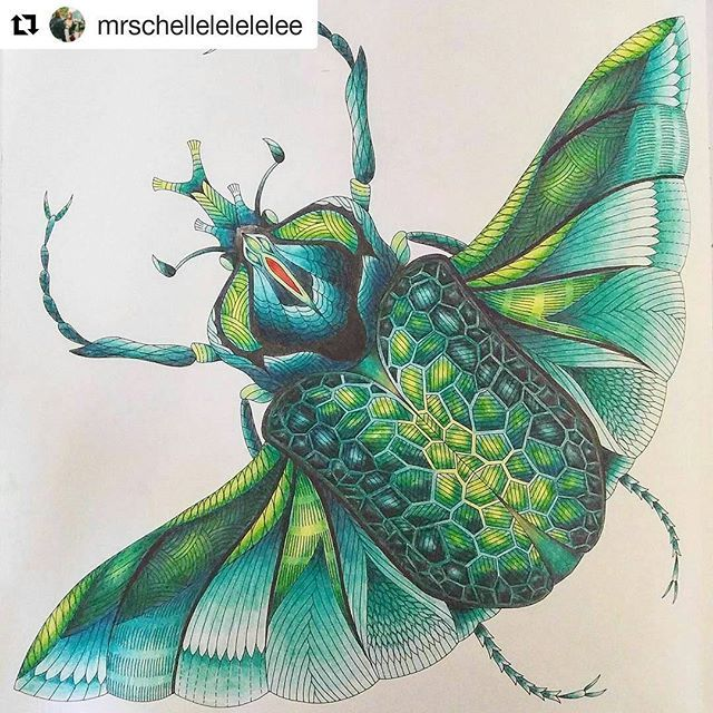 31 Best COLOURED INSECT AND BEETLE PAGES Images On Pinterest