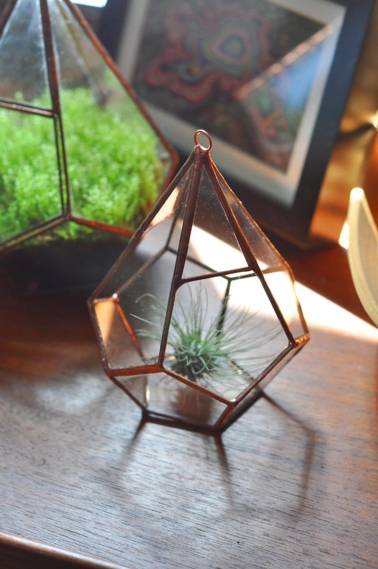 best plantsterrariums images on pinterest succulents