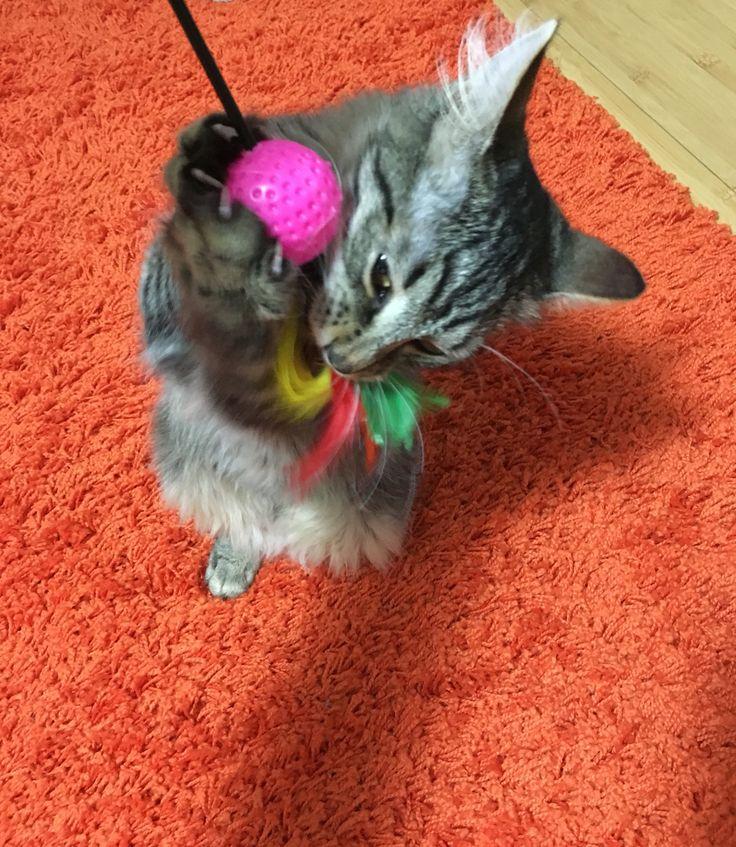 #cat #play