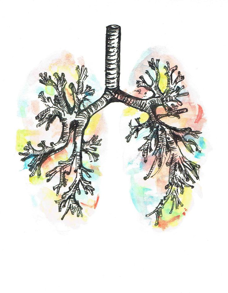 Watercolour Anatomy: The Lungs by chemical-adventures