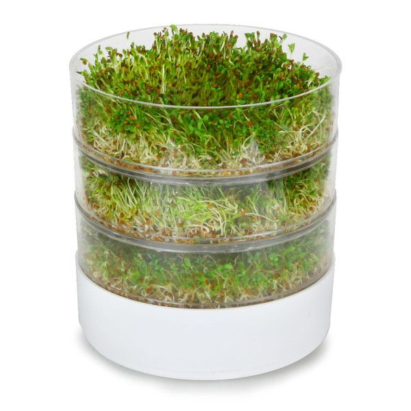 Shop Wayfair for Indoor Gardening to match every style and budget. Enjoy Free Shipping on most stuff, even big stuff.