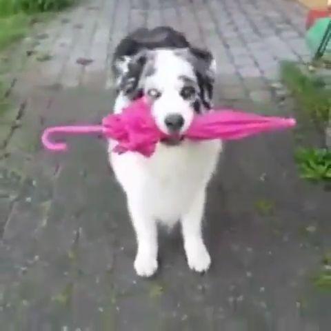 Amazing dog doing the victory walk cute animals dogs – Elizabeth Ortiz