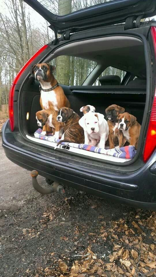Car load of cuties!!!!!