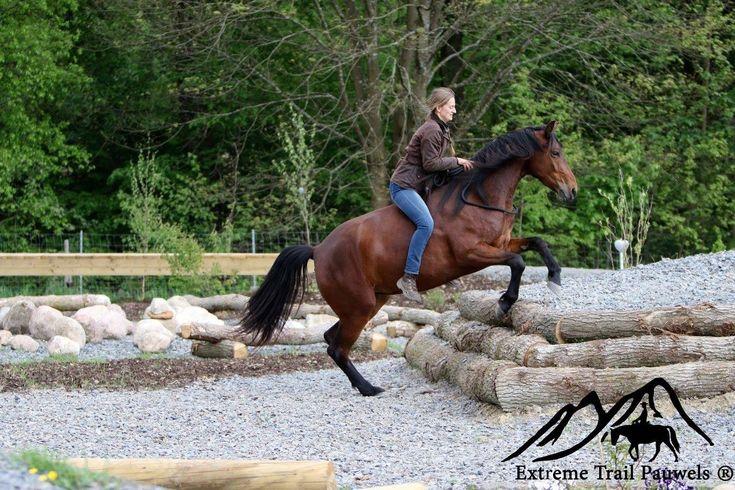 Unser Extreme Trail Park - horsemanshippauwelss Webseite!