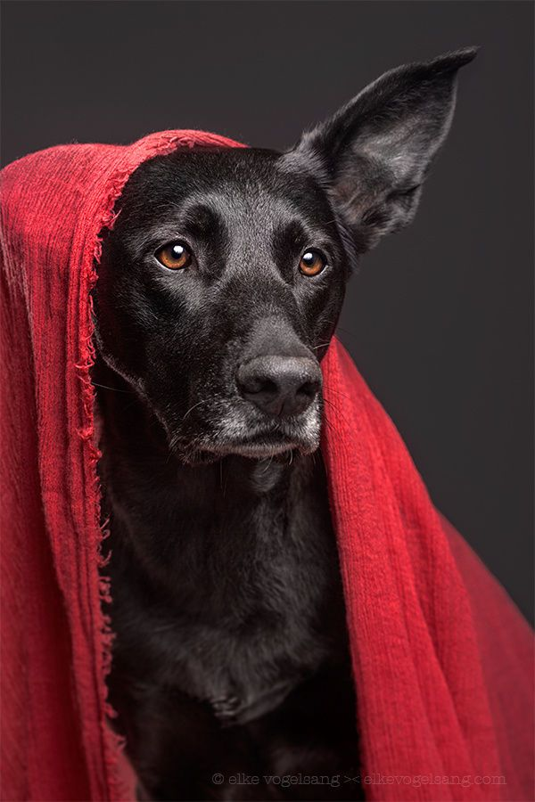 """""""All the better to hear you with, my dear!"""" by Elke Vogelsang on 500px"""