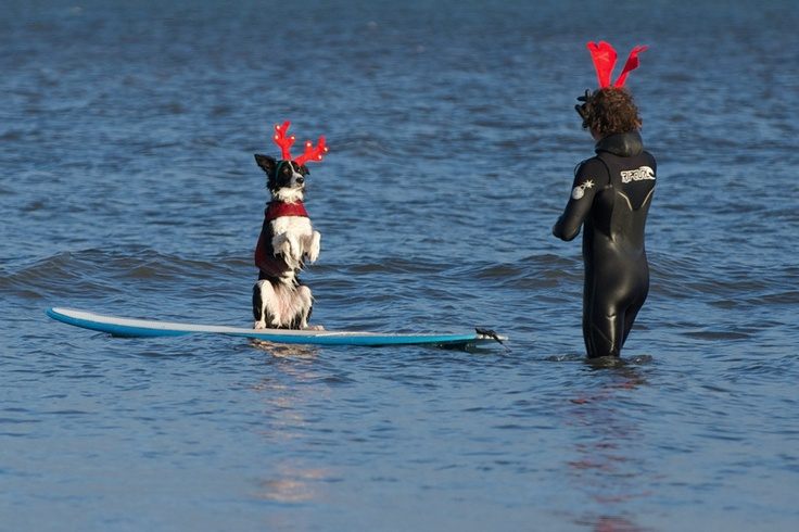 REINDEER GAMES: A dog and its owner participated in an annual Boxing Day dip into cold waters near Saltburn-by-the-Sea, England, Wednesday. (Ian Forsyth/London News Pictures/Zuma Press)