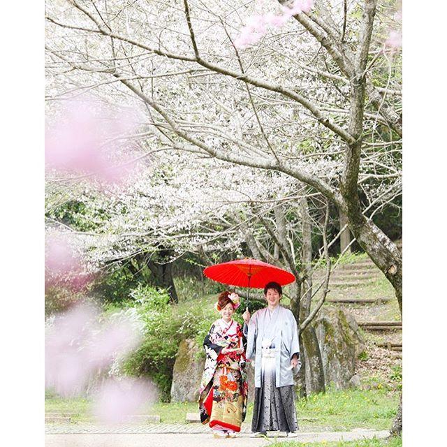 【shu_photo_cm】さんのInstagramをピンしています。 《・ 日本の美しい桜の時期は一瞬。 ・ 和装と桜満開の前撮り 春の訪れを感じるそんな一枚に。 ・ #運が良くないと撮れない #もうすぐ紅葉のシーズン #ブライダル撮影  #桜#ロケ撮#笑顔 #wedding #bridal#photo #結婚#ウェディング#プレ花嫁 #カップル#前撮り #可児市#岐阜県 #写真が好きな人と繋がりたい #ミスロージィ#shu#アトリエシュウ》