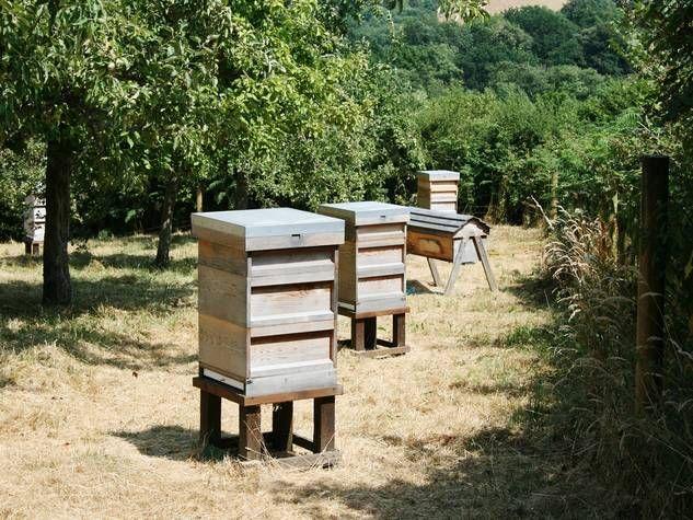 Bienenstöcke im Obstgarten.Holzkisten mit einem kleinen Ausflugsloch dienen als Bienenstock im Garten. Form und Farbe können individuell gewählt werden.