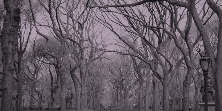 winter at central park, new york city 2009