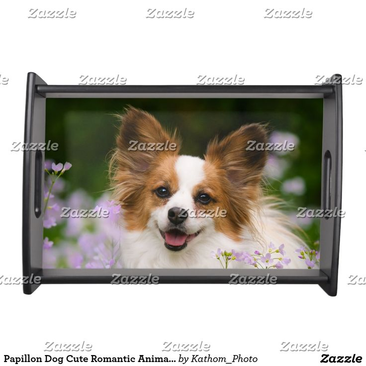 Papillon Dog Cute Romantic Animal Photo Portrait Serving Tray. Inspiration to create your product. The photograph must have good resolution. Inspiración para crear tu producto. La fotografía debe tener buena resolución. Bandejas Serving Trays, home decor, decoración. Producto disponible en tienda Zazzle. Decoración para el hogar. Product available in Zazzle store. Home decoration. Regalos, Gifts. #Bandejas #Serving #Trays