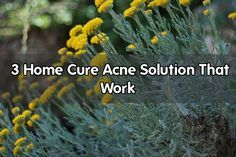 Acne is perhaps the failure of the most common skin that allows adolescents and shame most adults. Acne usually develops in adolescence, a time when two individuals. To be more specific, acne begins at the age of puberty and is more likely to get worse if you have oily skin. Hormonal imbalance can also... - #acne #skin #hormonal #zinc #cure #garlic #treatment #juice #lemon #primrose #vitamin #pimples