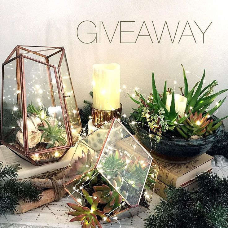 I started my holiday decorating this past weekend and if you've been following along recently you know my love for fairy lights runs deep.  Aren't they so lovely nestled among my succulents?   I've teamed up with @lightsdotcom for a #giveaway to offer TWO lucky winners a set of flameless candles and fairy lights  Just the thing to add that special touch to your holiday decor.   TO ENTER:  FOLLOW @lightsdotcom and @sadies_lovely_life  LIKE this photo and TAG your friends. Each tag is an…