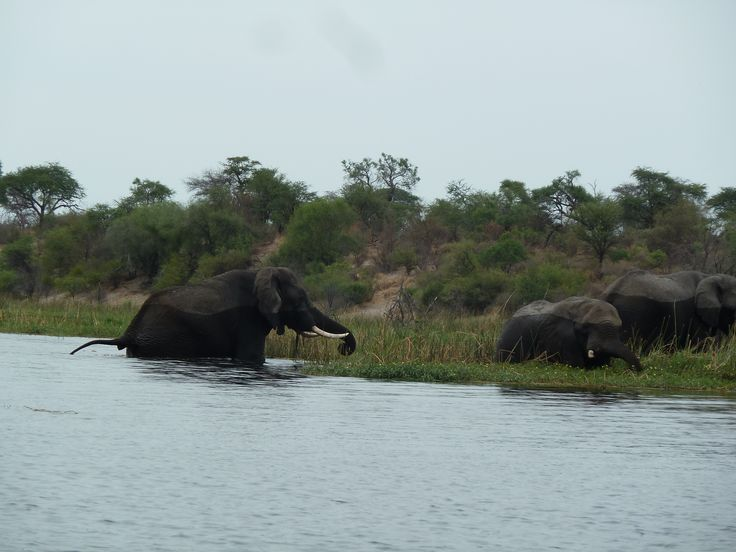 Bath time!  Botswana101.com #CampLerooLaTau #ElephantBathing #MakgadikgadiPansNationalPark
