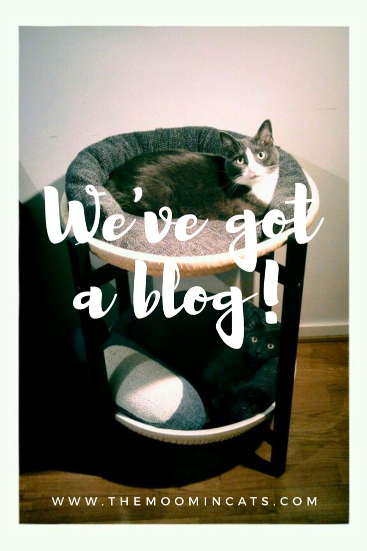 These two got a new blog! Check it out for inspiration for well-designed products for cats, DIY projects, and tips and tricks for happy cat life in general.