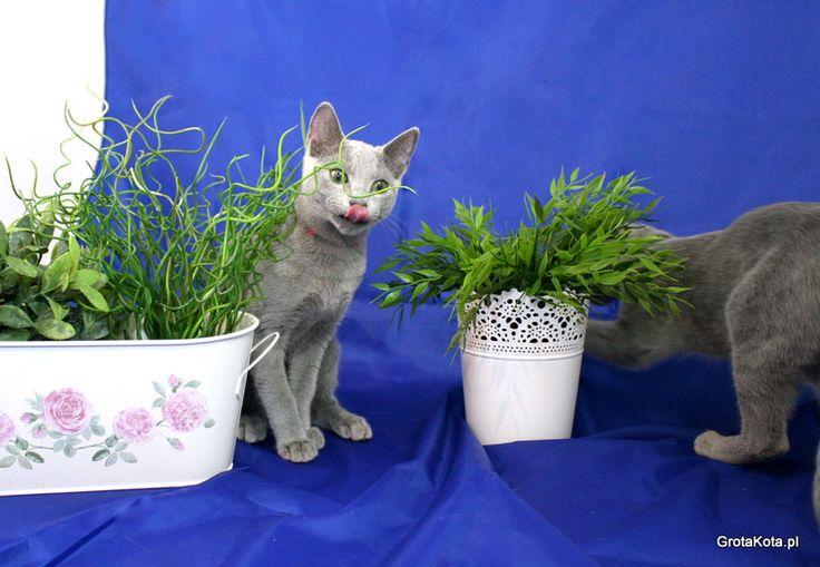 Koty i kwiaty