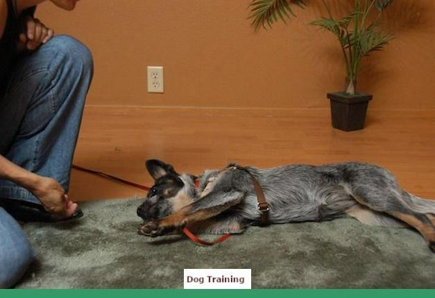 Dog Training Tips To Stop Barking Dogtraining And Clicker