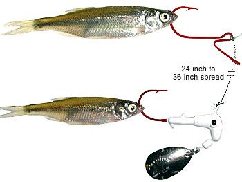 Double the hook double the crappie crappie fishing for Crappie fishing rigs