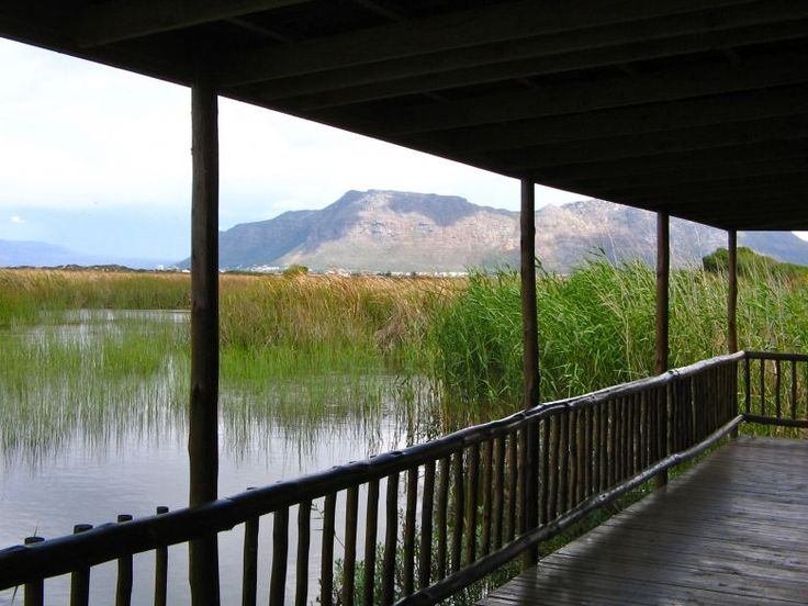 GO HIPPO SPOTTING AND BIRD WATCHING IN RONDEVLEI NATURE RESERVE  Cost: R12 entry for adults and R5 for kids  Rondevlei is an unexpected treasure situated within the Cape Town suburb of Grassy Park, about 20 min drive from the city centre. Home to some 256 species of indigenous plants, it spans 290 hectares and has a museum, a network of footpaths, viewing towers, and several bird hides.   #lovecapetown #capetown