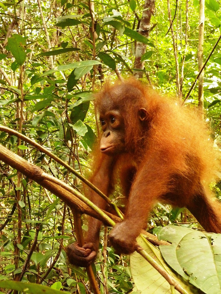 We miss you baby girl.... and will keep your memory alive.  http://redapes.org/sintang/jaan