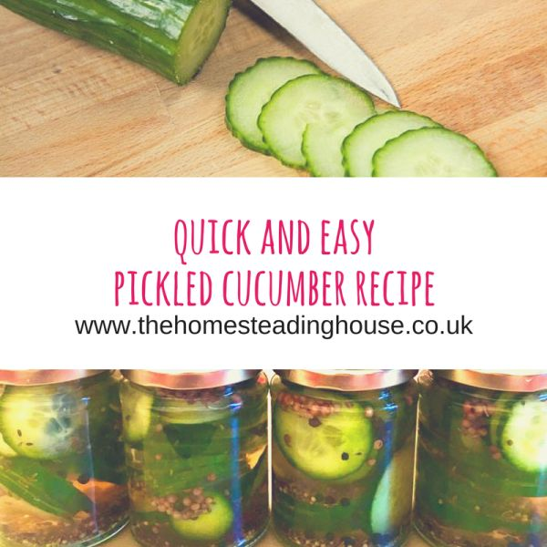 Easy & Quick Pickled Cucumber Recipe - UK recipe for delicious pickled cucumbers! #pickledcucumber #pickles #dillpickles #pickled #cucumber #recipe - http://www.thehomesteadinghouse.co.uk/easy-quick-pickled-cucumber-recipe-uk-recipe-for-delicious-pickled-cucumbers/