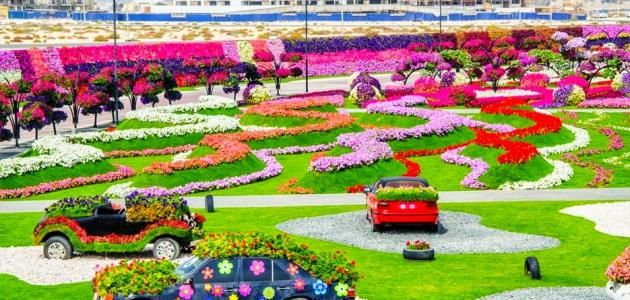 حديقة الورد في دبي Golf Courses Field
