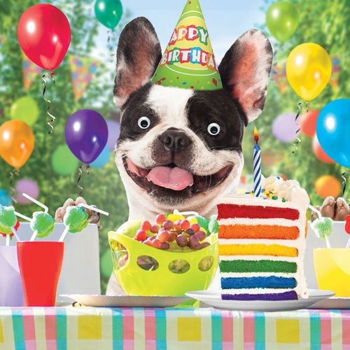 Happy Birthday Images With French Bulldog Singing Birthday Cards French Bulldog French Bulldog Funny