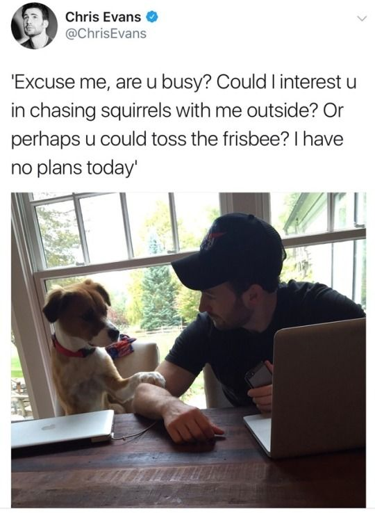 @ChrisEvans: 'Excuse me, are u busy? Could I interest u in chasing squirrels with me outside? Or perhaps u could toss the frisbee? I have no plans today'