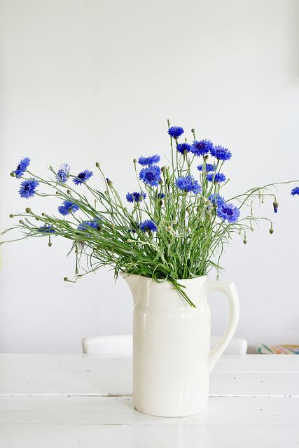 summer flowers -- Mother grew several flowers for cutting in her garden, and often sent me out to pick them.  This cornflower, or Bachelor's Button as we called them, was a favorite.