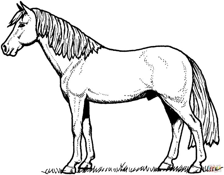 Free Horse Coloring Pages  Horse Coloring Pages  Pinterest