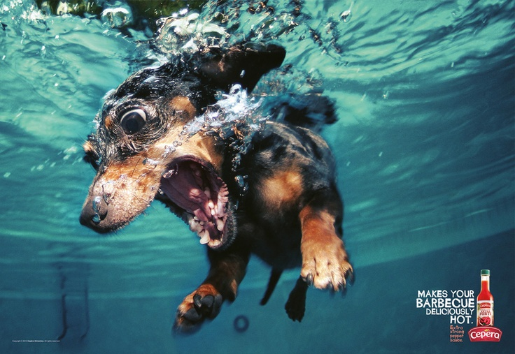 Salsa extremadamente picante: Underwater Photos, Dogs Pics, Funny Dogs, Dogs Photography, Hilarious Pictures, Dogs Photos, Underwater Dogs, Wiener Dogs, Seth Casteel