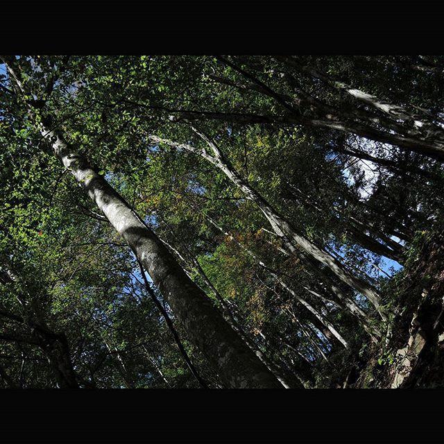 【_.chem._2】さんのInstagramをピンしています。 《山。  Mountain.  #岐阜 #郡上市 #簗谷山 #山 #登山 #山登り #森 #木 #自然 #きのこ #日本 #風景 #ニコン #nikon #p340 #gifu #gujyo #yanadaniyama #mountain #climbing #hiking #forest #tree  #nature #mushroom #nippon #japan #landscape》