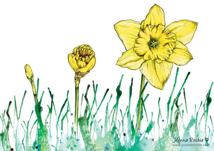 Evolve - Daffodils Watercolour, Pen & Coloured Pencil Print | Yellow Spring Flowers | March Birth Flower | Botanical Illustration Art.  Daffodils are the birth flower for the month of March, which is also the month which marks the start of Spring. In the language of flowers daffodils represent new beginnings. To create a sense of new beginnings, I decided to illustrate the growth of the daffodil from bud to bloom, and use bright colours to represent an uprising of change.